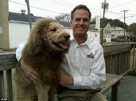狗狗剪毛换发型酷似小狮子 路人误认报警图片