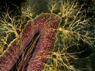 显微镜下的神经元艺术画